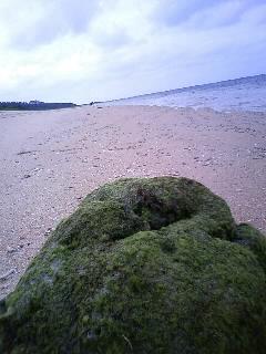 五日目  西表島
